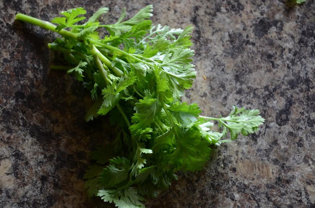 Cilantro a key ingredient, from my herb garden.